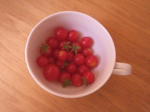 tomato6_2013-08-20.jpg